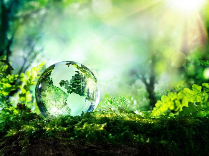 a crystal ball lays in a forest.